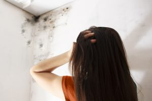 mold removal, mold remediation, mold cleanup